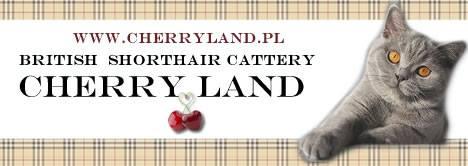 banner cherry land